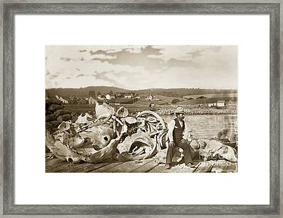 Michael Noon Sitting On A  Pile Of Whale Bones Monterey Wharf  Circa 1896 Framed Print