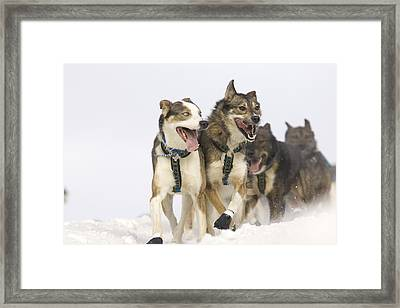 Michael Suprenants Lead Dogs Crest The Framed Print by Jeff Schultz