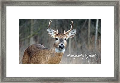 Michigan 8 Pointer Framed Print by Frank Sciberras