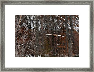 Michigan Redtail Hawk Framed Print