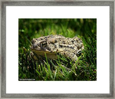Michigan Toad In The Wild Framed Print
