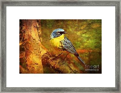 Michigans Rare Kirtlands Warbler Framed Print