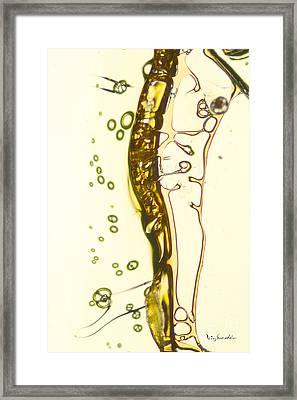 Micro Art Beer 13 Framed Print by Vin Kitayama