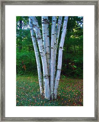 Framed Print featuring the photograph Micro-grove by Daniel Thompson