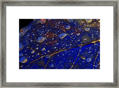 Micro Worlds Framed Print