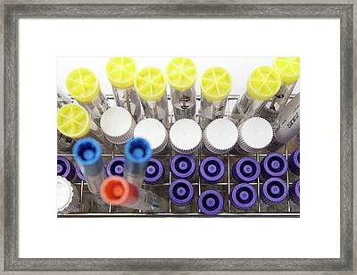 Microbial Sample Transport Swabs And Tubes Framed Print by Daniela Beckmann / Science Photo Library