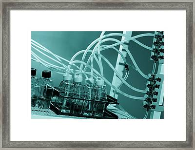 Microbiological Cell Cultures Framed Print