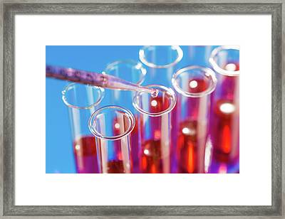 Microbiological Test Tubes And Pipette Framed Print by Wladimir Bulgar