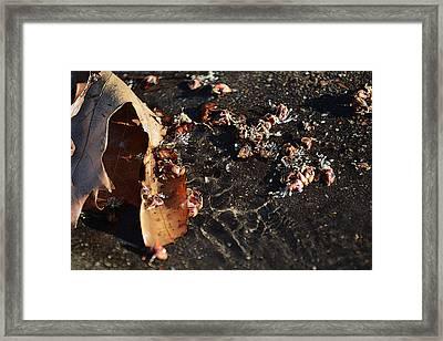 Microcosmic Framed Print by Rhys Arithson