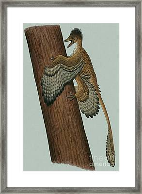 Microraptor Gui, A Small Theropod Framed Print by Heraldo Mussolini