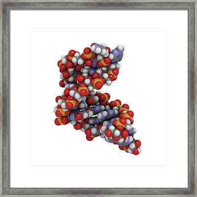 Microrna Molecule Framed Print by Molekuul