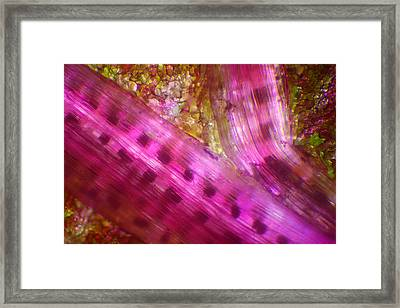 Framed Print featuring the photograph Microscope - Colorful Veg 2 by Afrison Ma