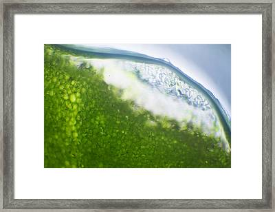 Microscope - Leaf And Bubble 5 Framed Print