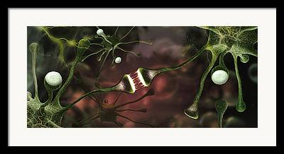Microbiology Framed Prints