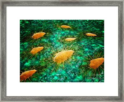 Microscopic View Of A Group Framed Print by Stocktrek Images
