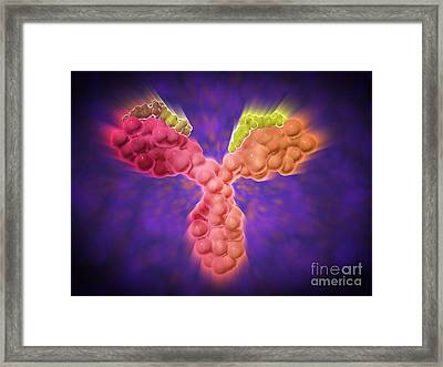 Microscopic View Of A Human Antibody Framed Print by Stocktrek Images