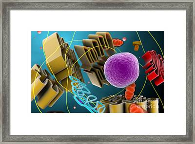 Microscopic View Of Animal Cell Nucleus Framed Print by Stocktrek Images