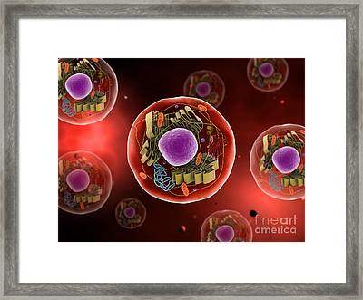 Microscopic View Of Animal Cell Framed Print by Stocktrek Images