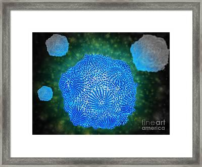 Microscopic View Of Canine Parvovirus Framed Print