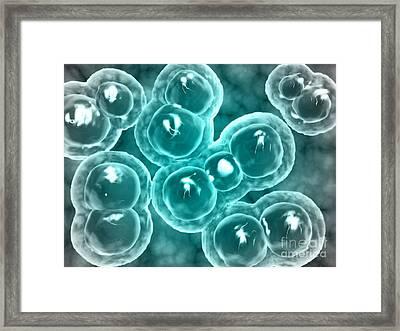 Microscopic View Of Chlamydia Framed Print