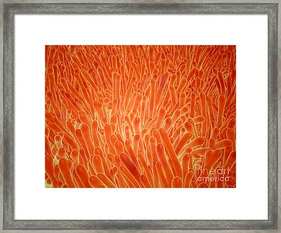 Microscopic View Of Intestinal Villi Framed Print by Stocktrek Images