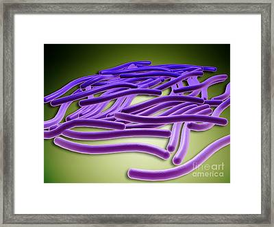 Microscopic View Of Legionella Framed Print by Stocktrek Images