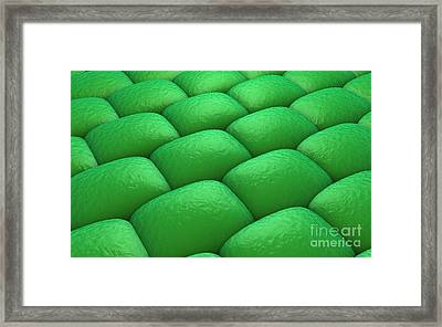 Microscopic View Of Plant Tissues Framed Print by Stocktrek Images