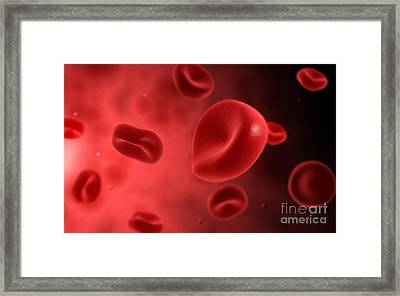 Microscopic View Of Red Blood Cells Framed Print