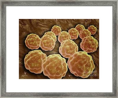 Microscopic View Of Rubella Virus Framed Print by Stocktrek Images