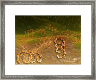 Microscopic View Of Syphillis Framed Print by Stocktrek Images