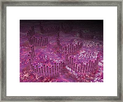 Microscopic View Of The Cochlea Framed Print by Stocktrek Images