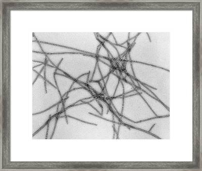 Microtubules Framed Print by Thomas Deerinck, Ncmir