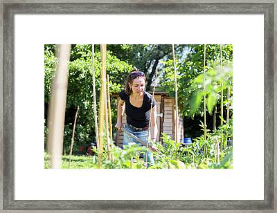 Mid Adult Woman Working In The Garden Framed Print by Gombert, Sigrid
