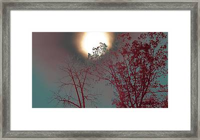 Mid-afternoon Sun Framed Print