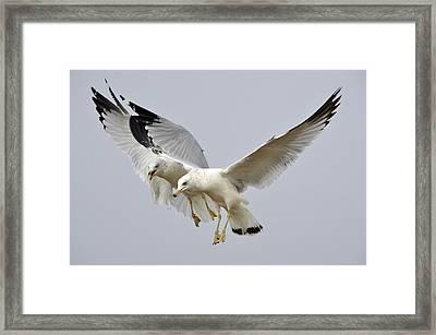 Mid Air Competition Framed Print by Fraida Gutovich