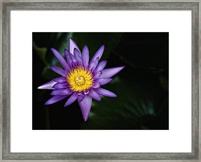 Mid-night Beauty Framed Print