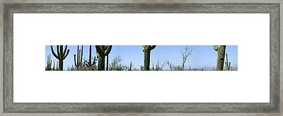 Mid Section View Of Cactus, Saguaro Framed Print by Panoramic Images