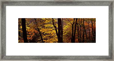 Mid Section View Of Trees, Littlebeck Framed Print by Panoramic Images