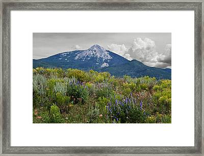 Mid Summer Morning Framed Print