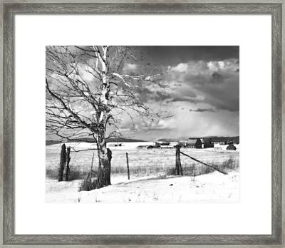 Mid-winter Moonlight Framed Print by Theresa Tahara