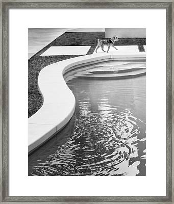 Midcentury Madison Palm Springs Pup Framed Print by William Dey