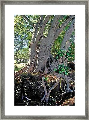 Midday In The Garden 3 Framed Print