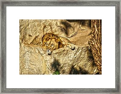 Midday Siesta Framed Print by Joe Bledsoe