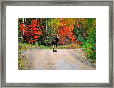 Middle Of The Road Framed Print by Cassandra Larcombe
