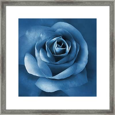Midnight Blue Rose Flower Framed Print by Jennie Marie Schell