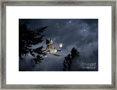 Midnight Flight Framed Print