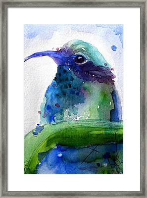 Midnight Hummer Framed Print