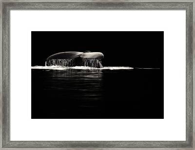 Midnight Humpback Framed Print