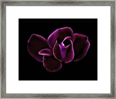 Midnight Knockout Rose Framed Print