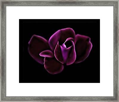 Midnight Knockout Rose Framed Print by Walt Foegelle